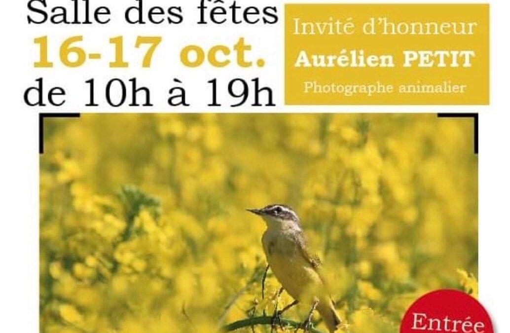 EXPO Aurélien Petit